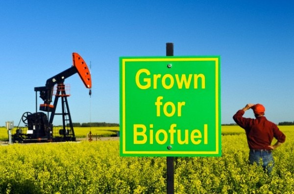 All You Need to Know about Biofuel Energy