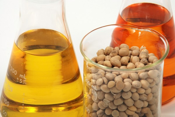 soy beans biofuel