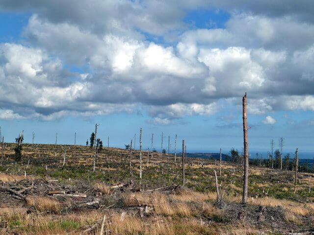 environmental issues deforestation