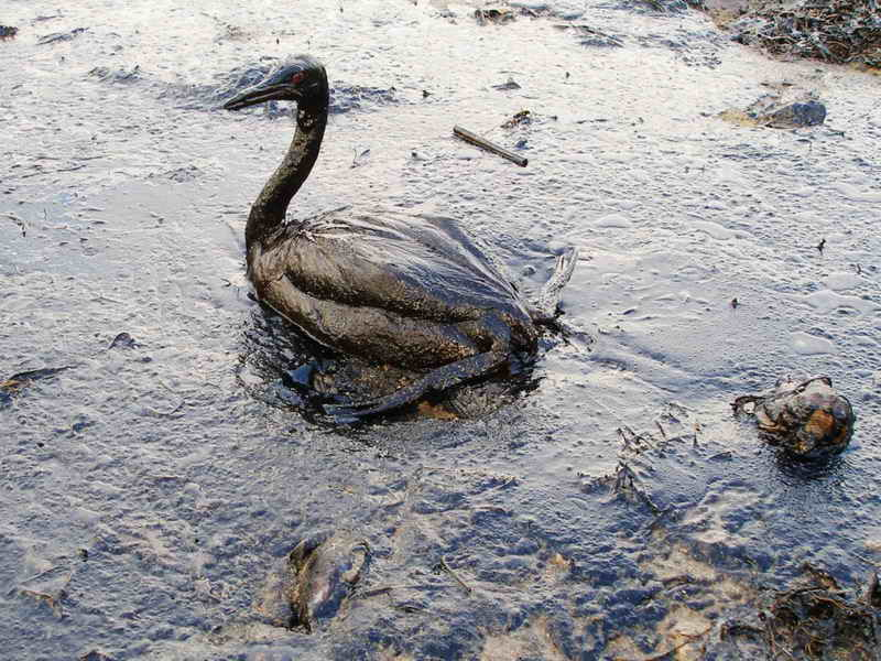 environmental issues oil spills