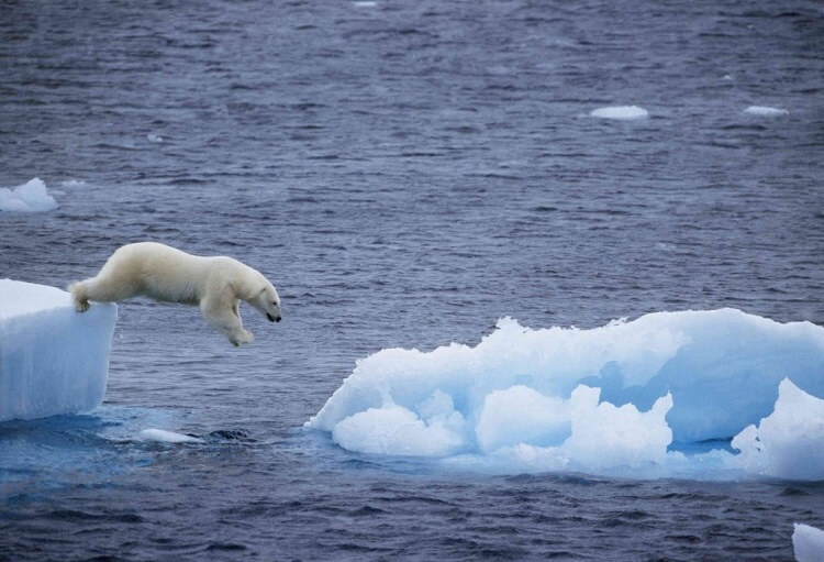 polar ice caps melting and a polar bear jumping from one to another