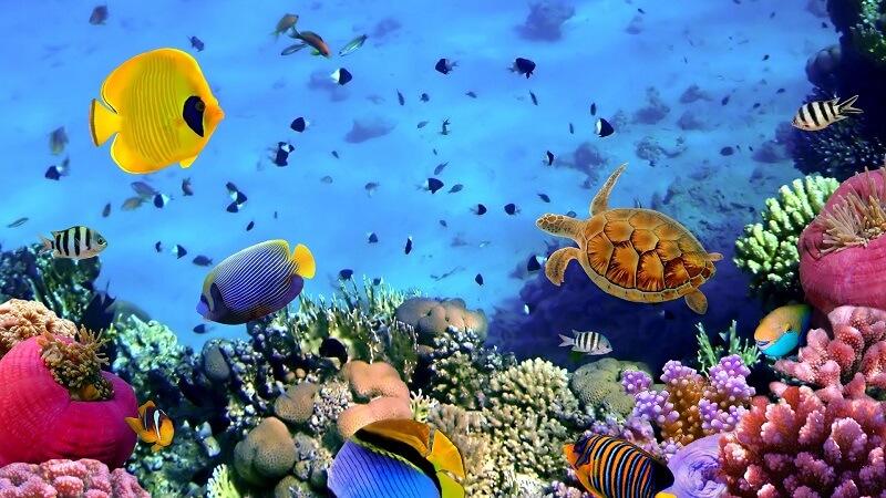 underwater ecosystem