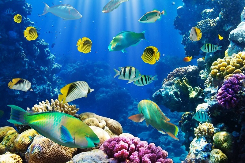 fish around the coral reef