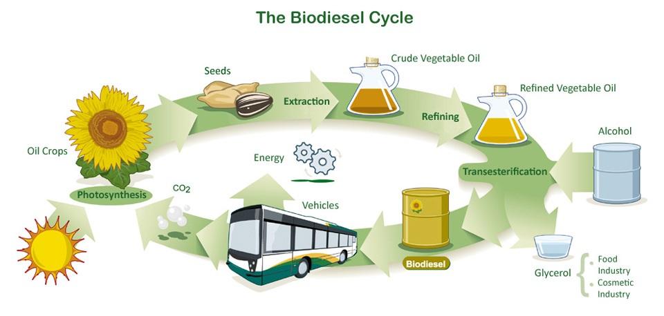 the biodisel cyrcle
