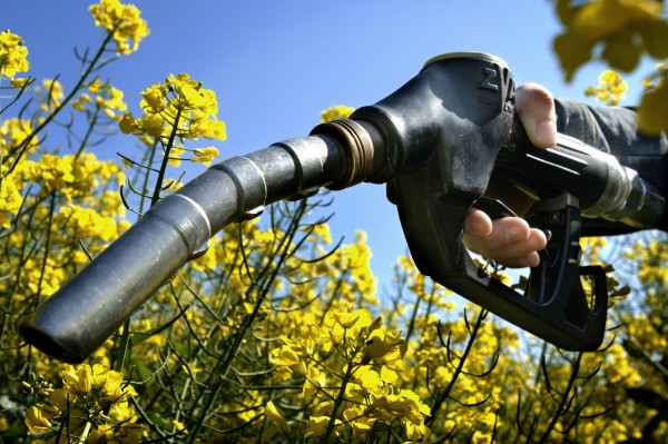 The Main Types and Uses of Biofuels