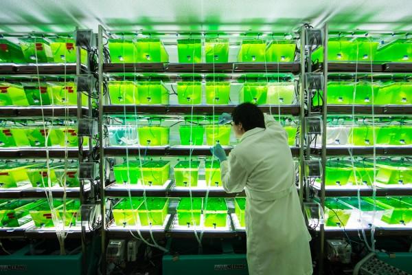 third generation algae biofuels containers lab