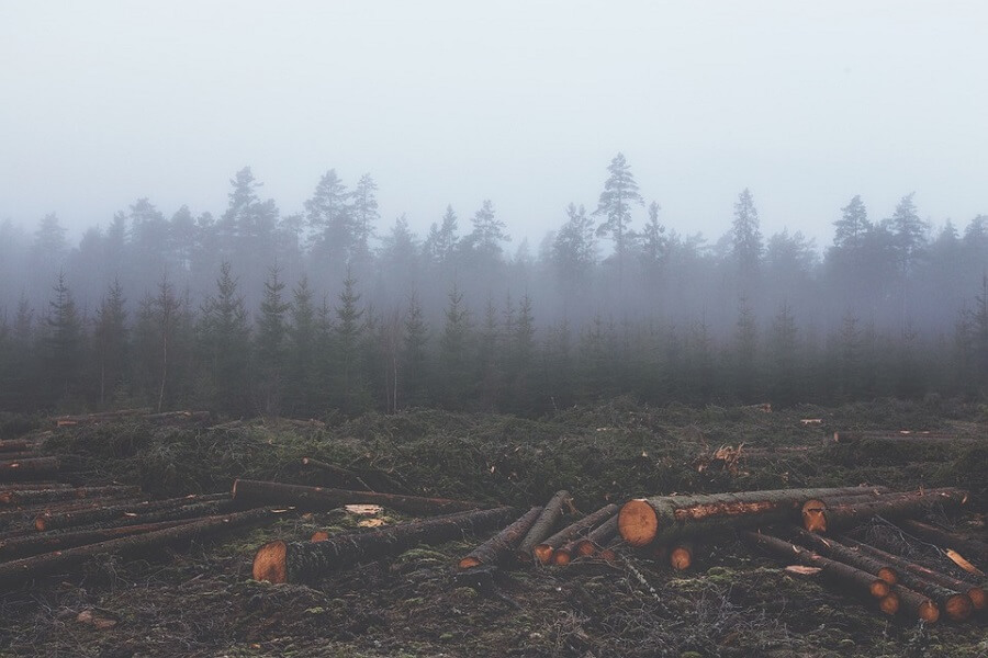 deforestation tress and fog
