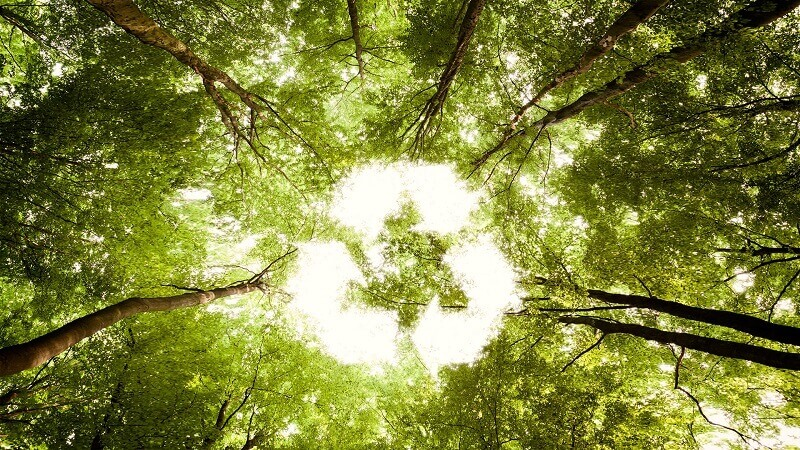 natural waste recycling, a reason for preserving biodiversity