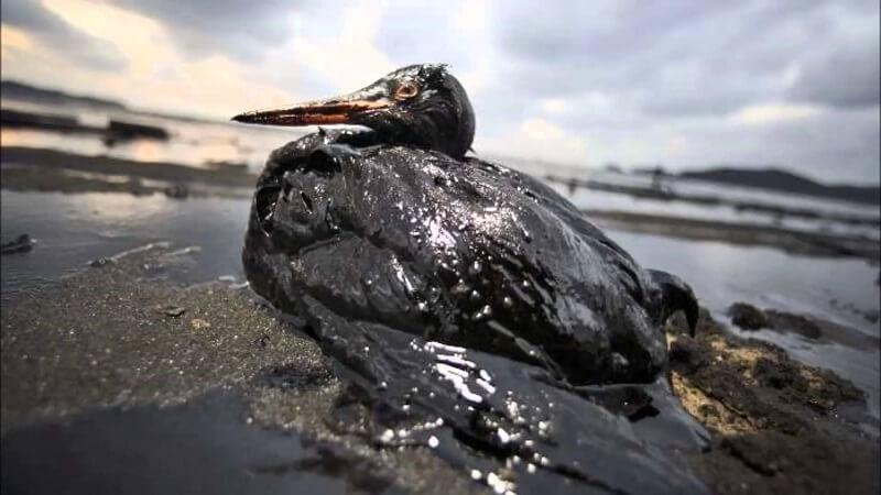 effect of oil spills on a bird